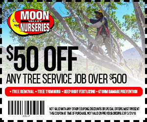WEB_50-OFF-Tree-Service-Coupon-300x250-4