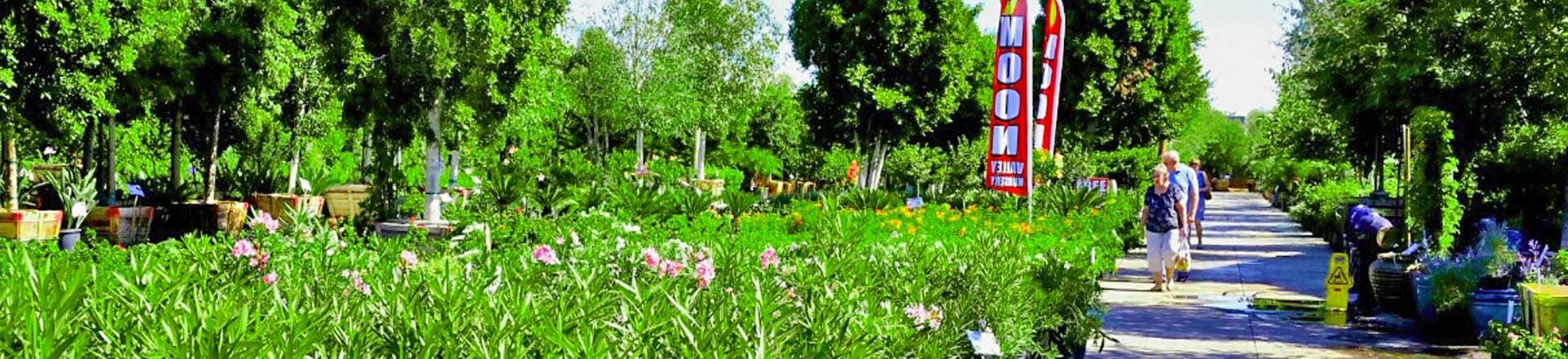 shrubs_1920x440-1.jpg